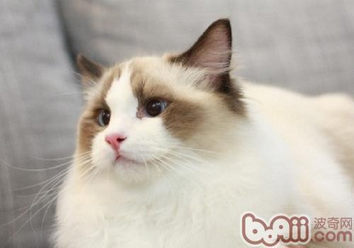 怎么让猫猫乖乖洗澡?