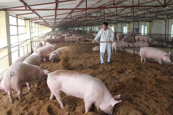 农村小伙回家养猪有味道,被邻居告了,找谁说理?
