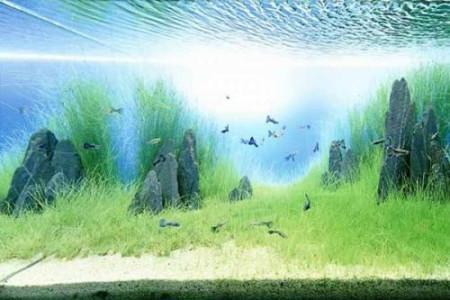 养金鱼没有氧气泵,用什么方法代替?