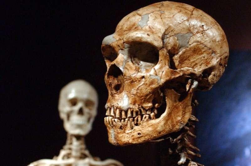 现代人类独一无二?科学家:只有7%DNA与众不同