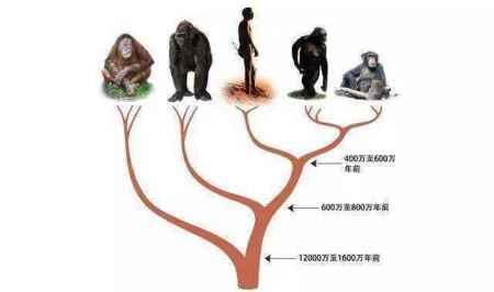 """人类男性为什么会弄丢""""丁丁骨""""?这是进化优势,还是倒退了?"""