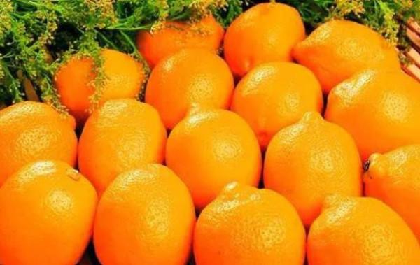 赣南脐橙哪里的最好吃