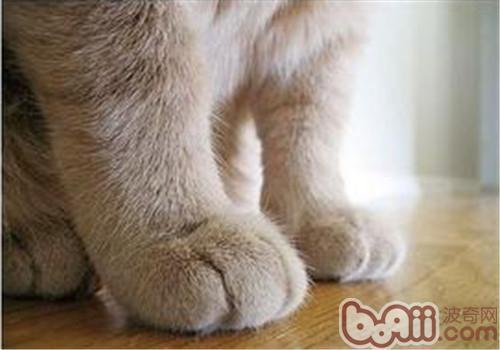如何训练猫咪不抓人?