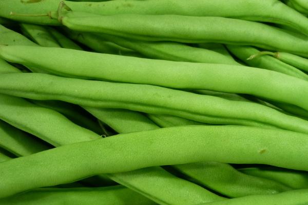 在农村种植四季豆,需要什么样的环境条件?