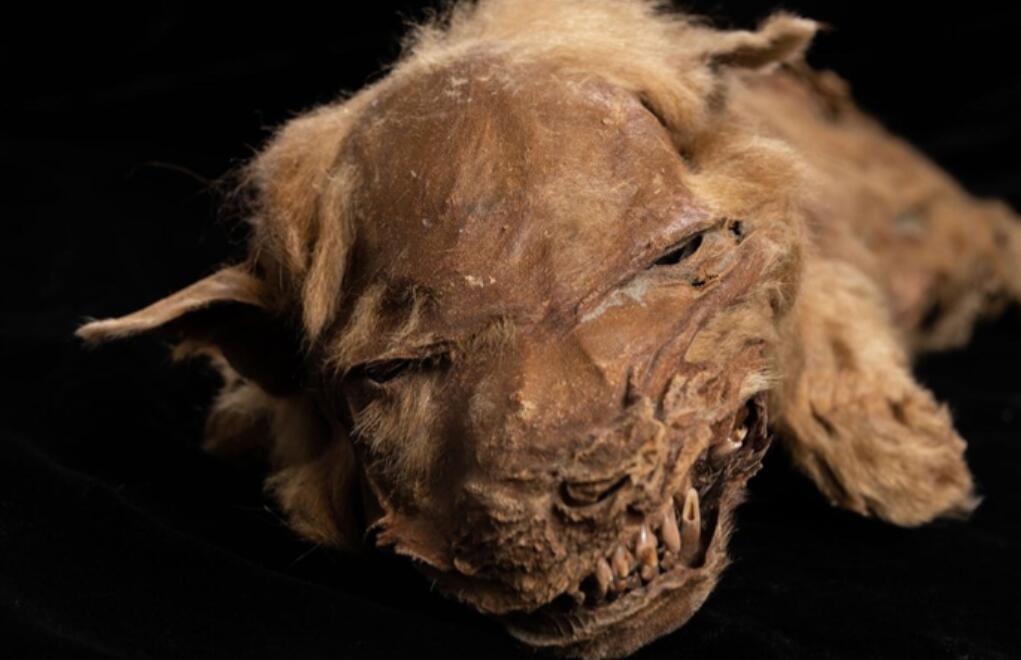 北极挖出生物尸体!24000年前生物被复活,潘多拉魔盒开了?