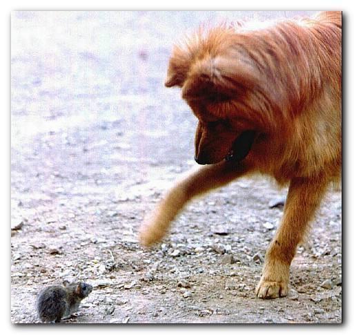 什么狗烹成语_成语故事图片