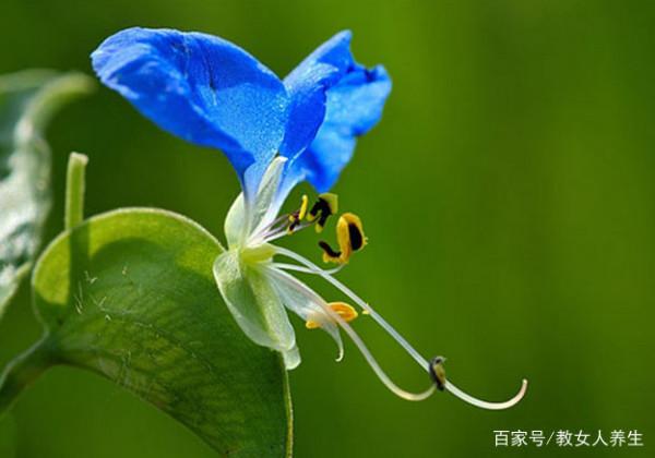 可以吸附甲醛的植物有哪些 什么植物吸收甲醛的效果好?