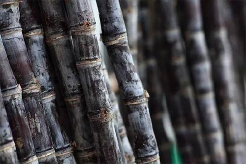 农民嫌种甘蔗麻烦不赚钱,巴西也种甘蔗,为啥能低成本便宜卖?