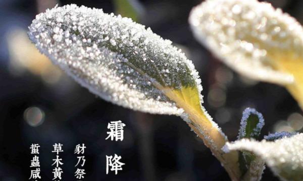 2020霜降时间是几月几日几点?(2020年的霜降节气是几月几号)