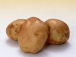 土豆什么时间适宜种植?