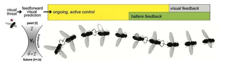 """小脑袋,高""""智商"""":苍蝇也具备预测能力"""