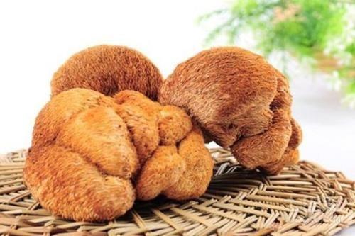 猴头菇为什么会有养胃的功效?