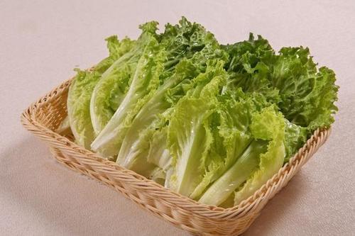 生菜种子种植之前为什么要冷藏处理?