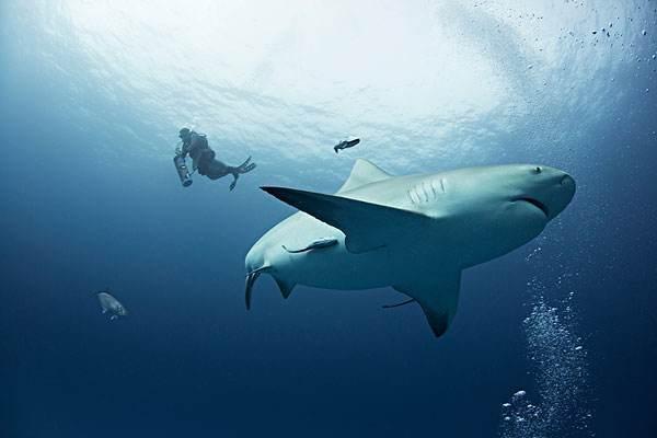 鲨鱼怀孕需要四年,为什么这么长时间?