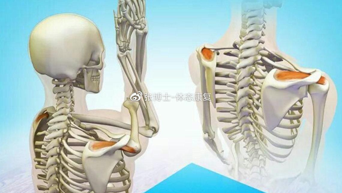 【运动康复科普】怎样松解、拉伸冈上肌以缓解肩关节不适