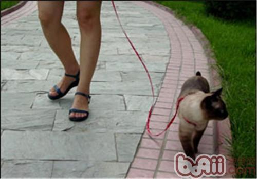 如何训练猫咪和你一起散步?