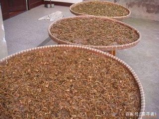 重庆的白腌菜、四川的梅干菜、扣肉碗底菜是怎么做出来的?