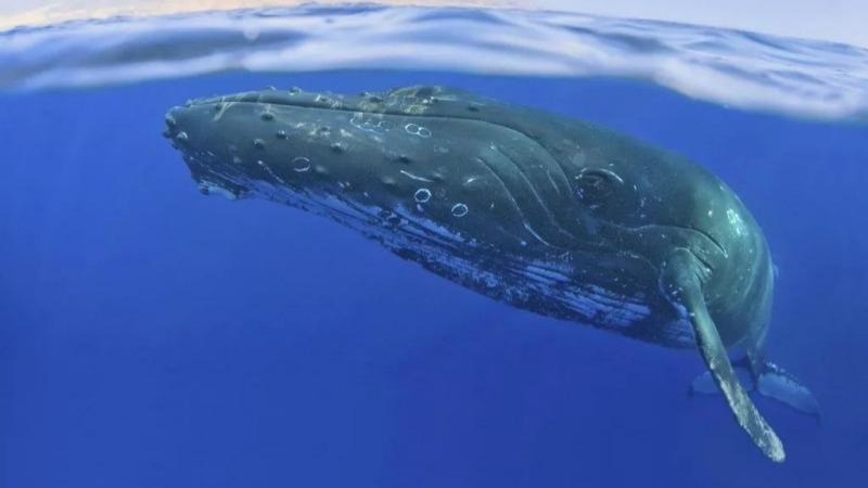 """鯨爆,為什么被稱為是""""最臭的生化武器""""?的頭圖"""
