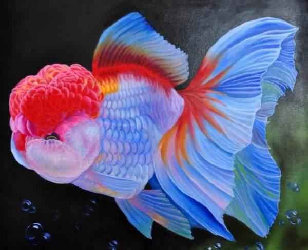 金鱼该再怎么饲养,注意事项及简单步骤大全?