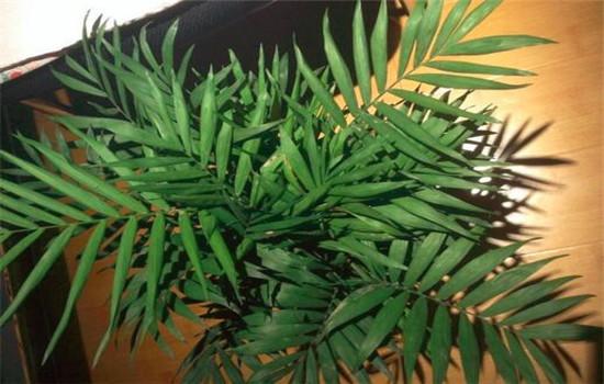 什么绿植适合放在卧室?