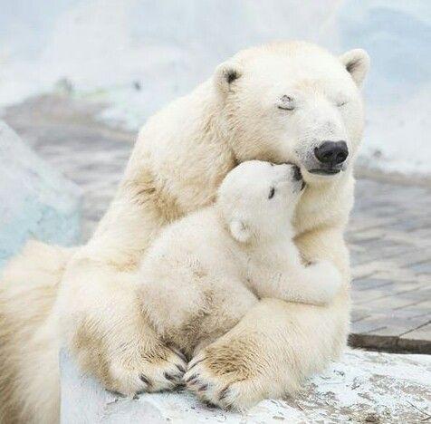 神农架与新疆都出现:五十万分之一概率的白化熊!究竟有何玄机?