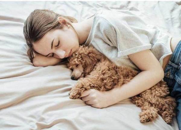泰迪为什么喜欢睡在你身边?