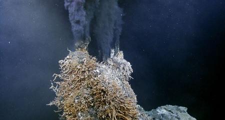 生活在450℃海底热泉旁的大虾,数量惊人,如何下火锅?