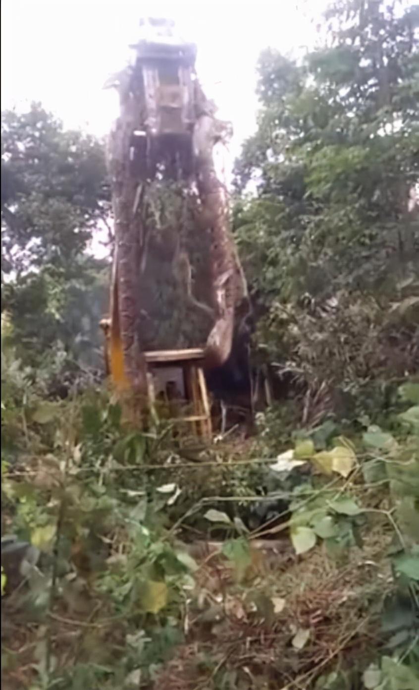 最大的蛇到底有多大?印度发现罕见巨蟒:调来挖掘机才将其捕获