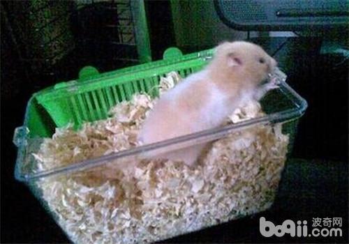 仓鼠的饮食习性有哪些?