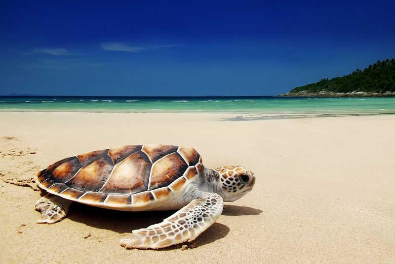 海龟身上发现了不可能出现的物质,科学家:人类应该警惕了?