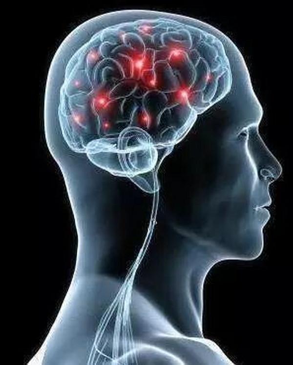 脑垂体:脑垂体是什么