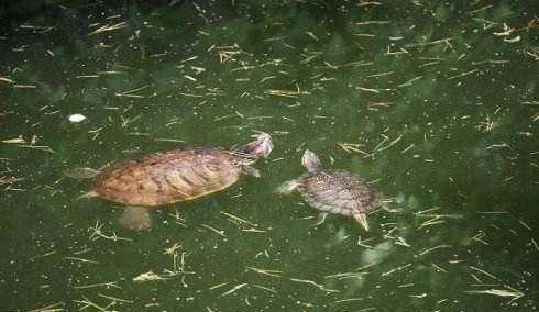 乌龟身上有毒吗?