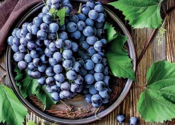 涨姿势丨酿酒葡萄为什么不洗?