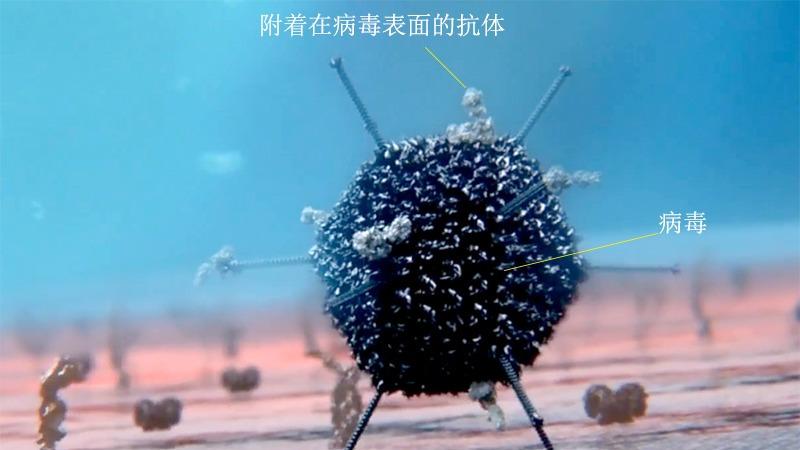 万物相生相克,那么病毒存在天敌吗?