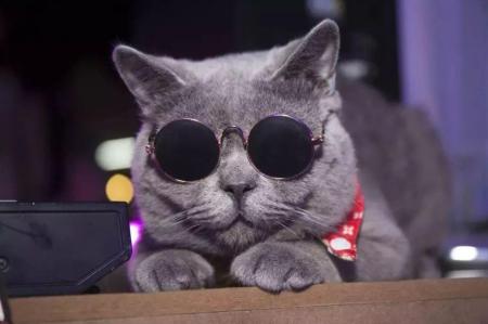 春天到了,夜里叫的猫是公猫还是母猫,为什么惨叫?