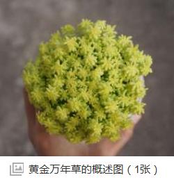 这是什么植物?