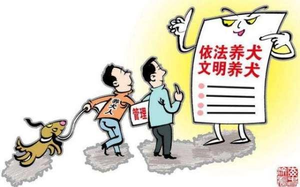 天津狗民网:网上免费领养狗狗靠谱吗?哪里可以免费领养狗狗?