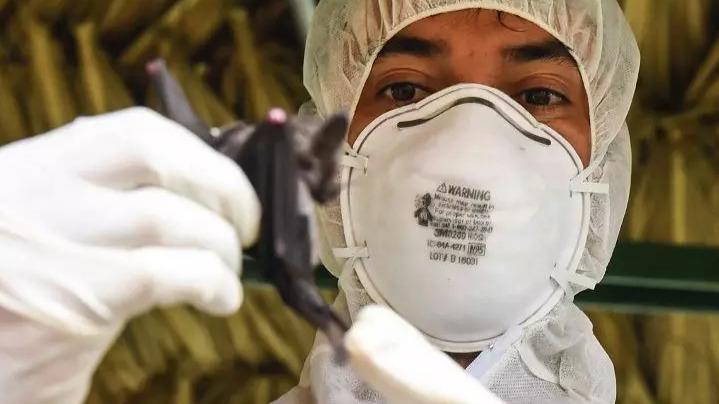 无症状病例已现!是谁把新冠病毒带到武汉?的头图