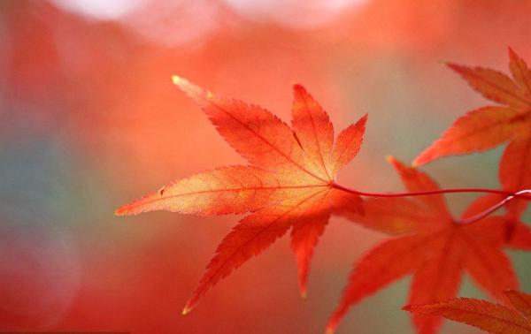 红色经典诗歌;关于红色经典的古诗