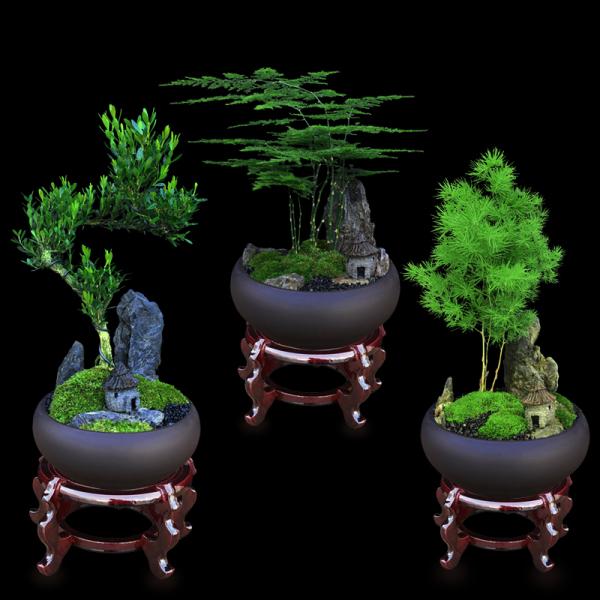 为什么富贵人家都有盆栽?