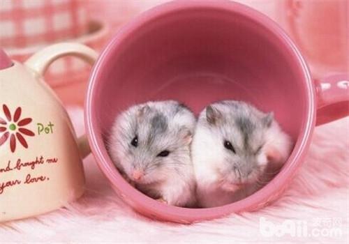 仓鼠喜欢的玩具有哪些?