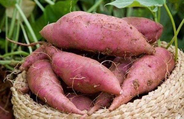 厨房里发芽的蔬菜 哪些能吃?