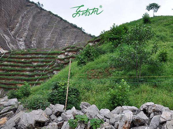 边坡绿化高陡石头边坡如何处理?