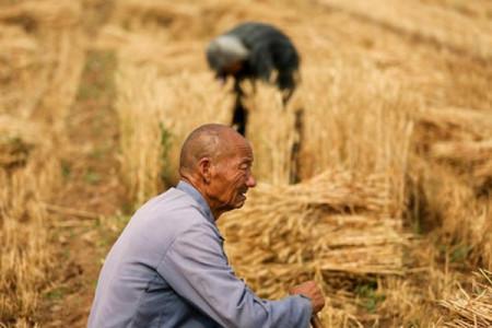 出口再跌20%,越南大米终于找到新买家,为何又突然找上中国?