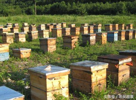 新手初学养蜂购置蜂群和怎么选购好蜂群?