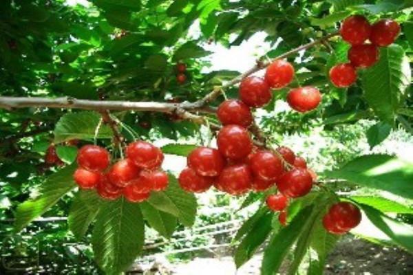 哪些水果堪称痘痘克星,别舍不得吃,不仅美白还祛痘?