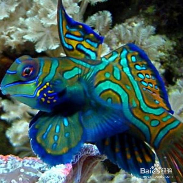 宠物鱼的种类图片:简述宠物鱼的分类?
