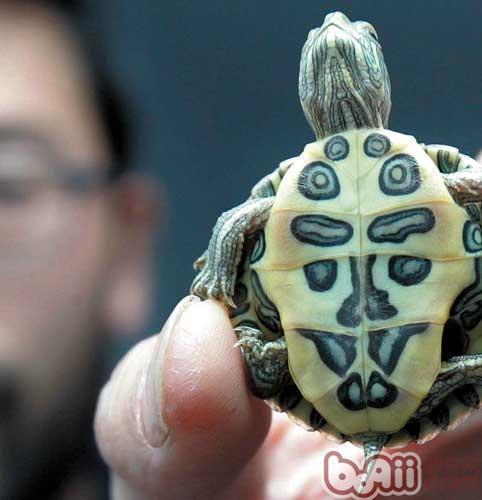 如何正确看待巴西龟?
