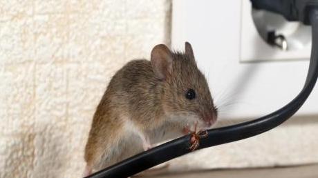 怎样可以让家里不招老鼠?