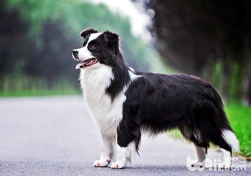 体味最轻的狗狗有哪些?